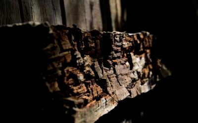 Dangers Of Dry Rot